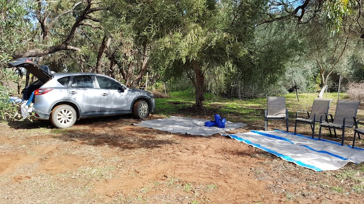 GREY FANTAIL CAMP SITE MOORA level 2wdaccess trees