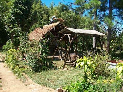 Casa rural campestre con árboles frutales