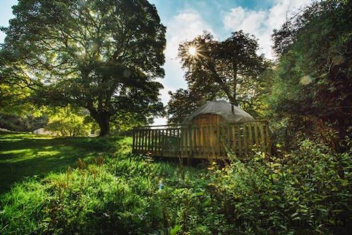Yew - Yurt