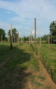 Tun Tavern Hops Farm - Casa
