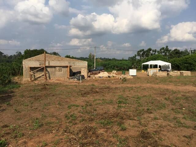Vente de forêt à Isia côte d'ivoire 5000€/hectare