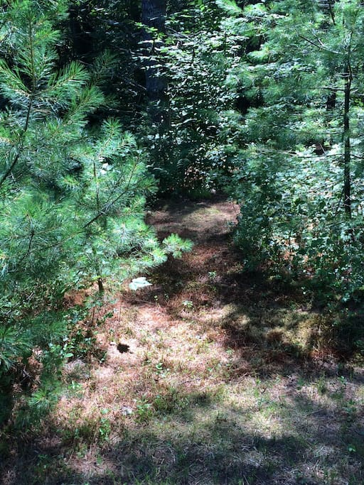 A small path leads you to a soft bed of pine needles to set your tent on.