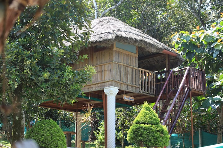 A Jungle Babbler's Tree House near Thekkady