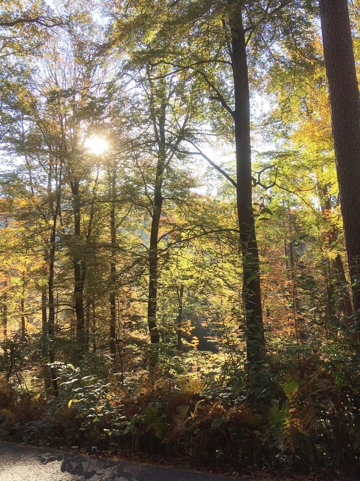 Lage im Herzen des wunderschönen Naturparks Pfälzerwald - und doch zentrumsnah
