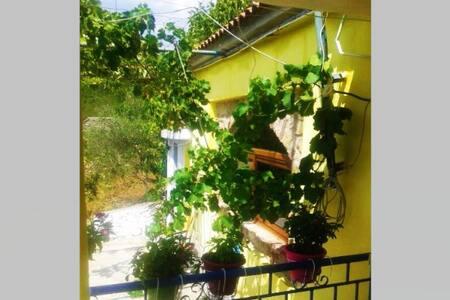 Chobani Guest House