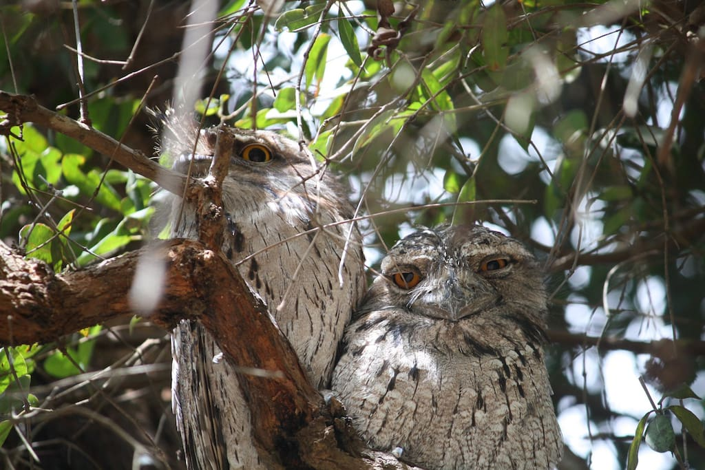 It's a Family Affair for our Tawny's