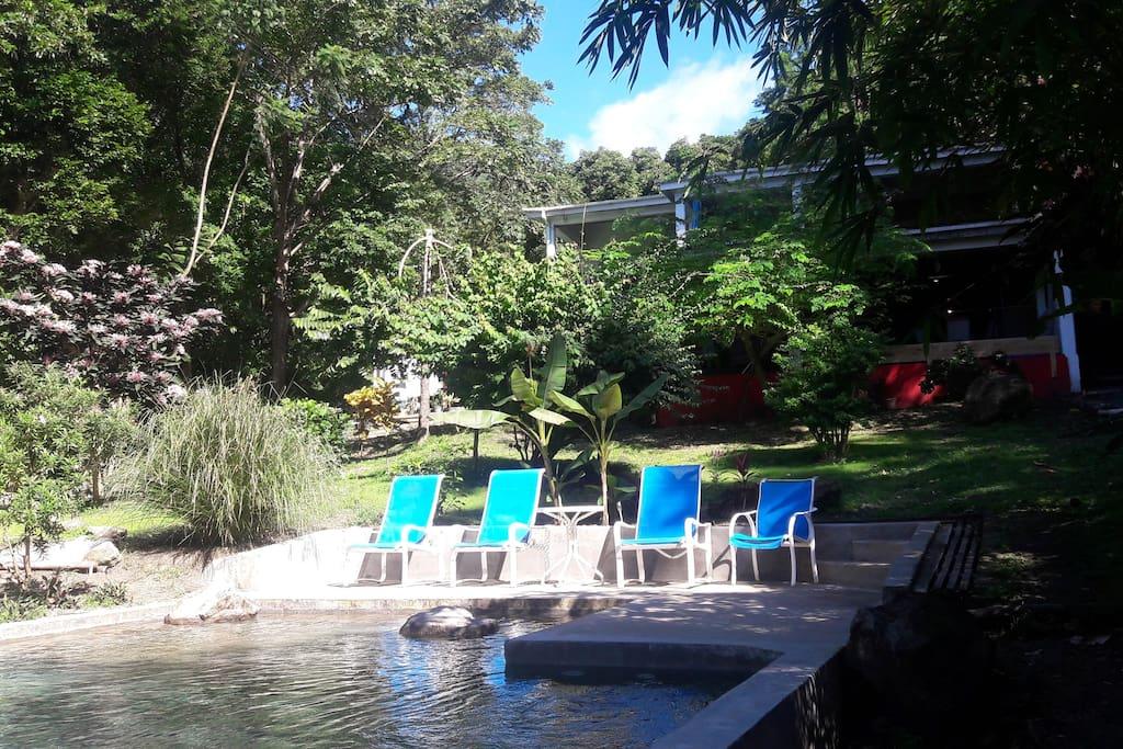 Piscine nichée dans le jardin Pool and tropical garden