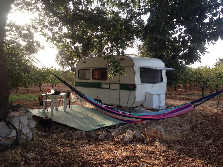 Caravan under oak  for true lover  Conversano BA