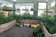 Inside the Green House