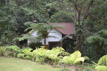 Cabaña: Reserva Natural Privada