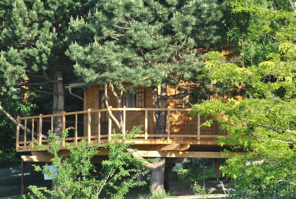 Une cabane perchée nichée dans les pins et les bouleaux