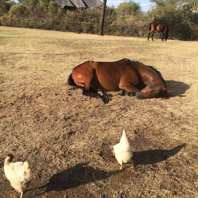 Enjoy happy horses and chickens
