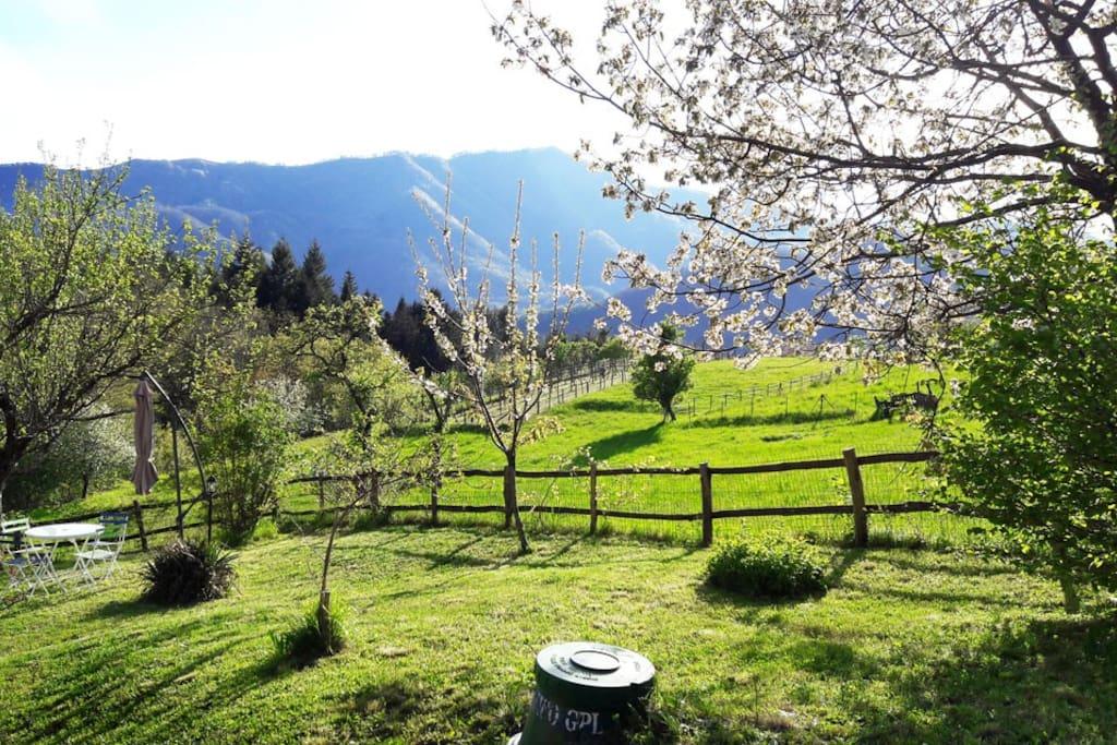 Esterno giardino con vista sud ovest