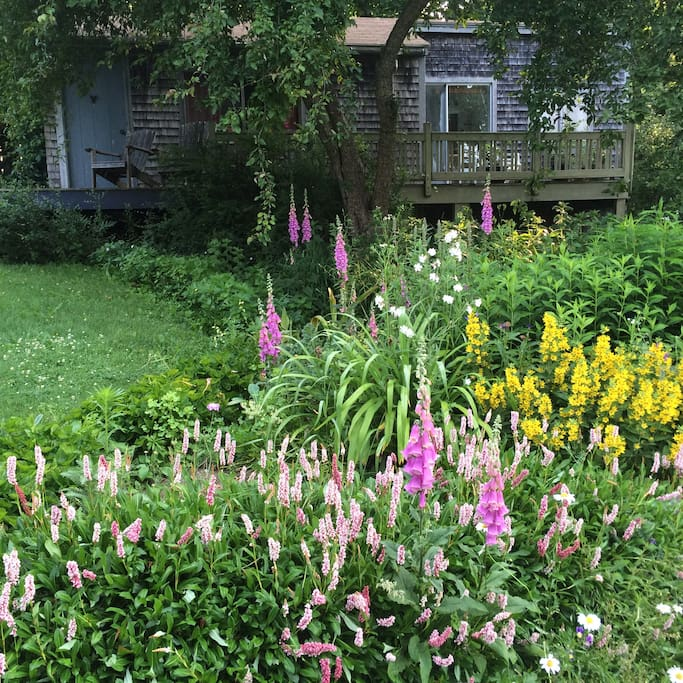 Perennial gardens out your front door!