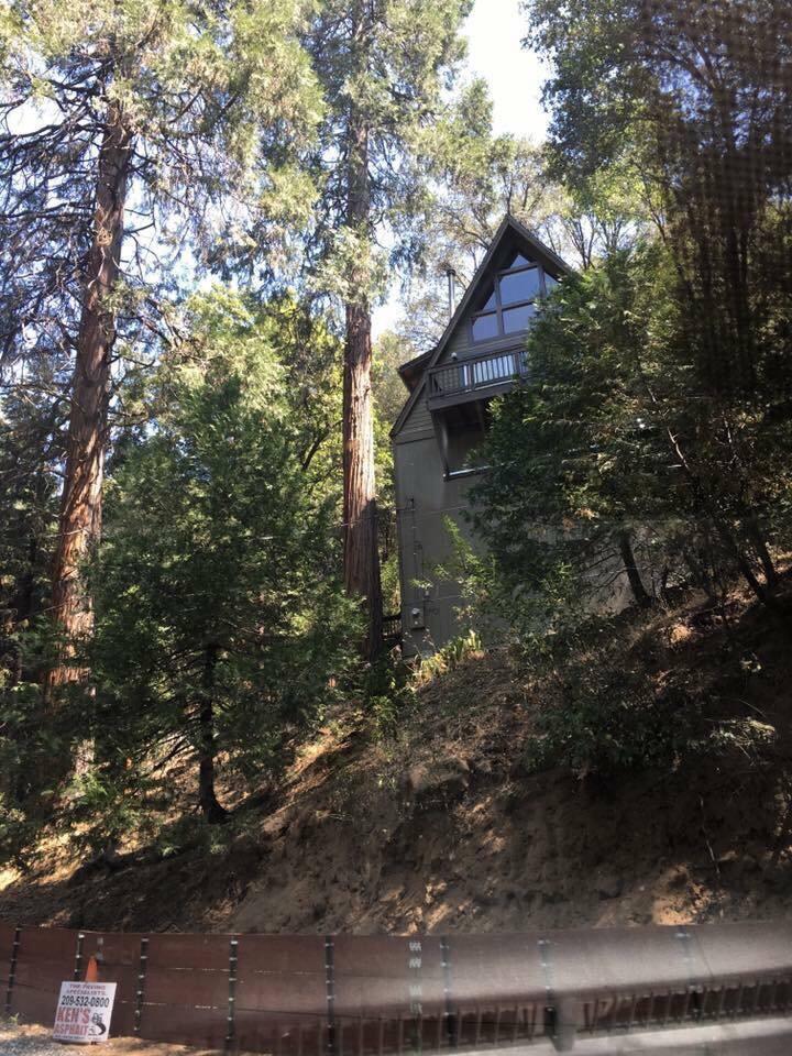 A house that feels like a treehouse