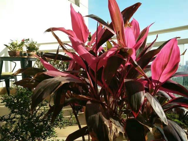 入户花园处,美丽的红铁。