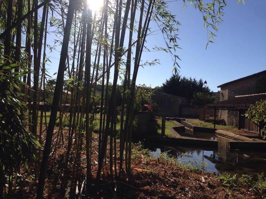 source de la Dive au fond du jardin, lavoir et bambouseraie
