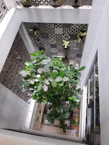 Trees in house -  Barcode House by NHÀ TUI share