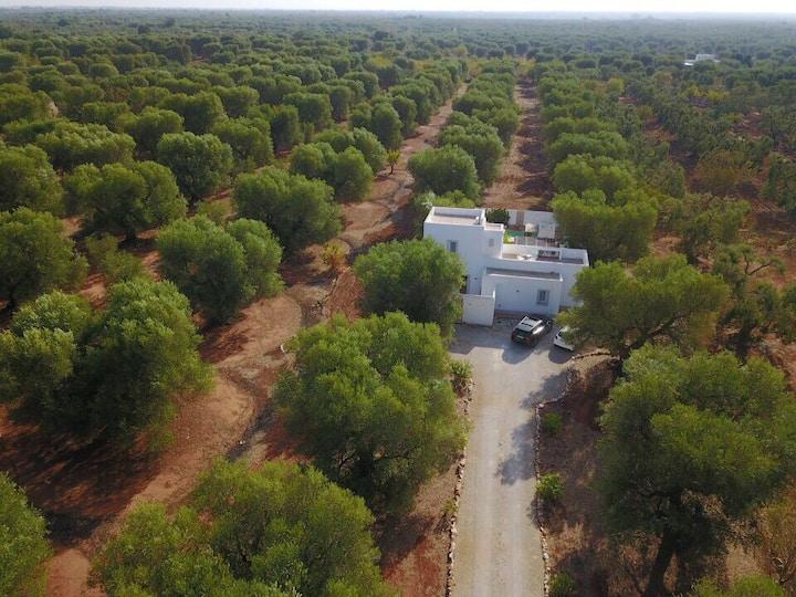 Private villa in Puglia countryside