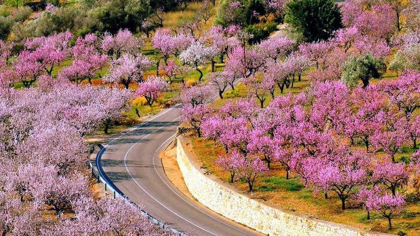 One of the routes through the almond blossoms of Alcalali. The villages of Jalon and Parcent are only 5 minutes away. The morning commute can be such a drag!