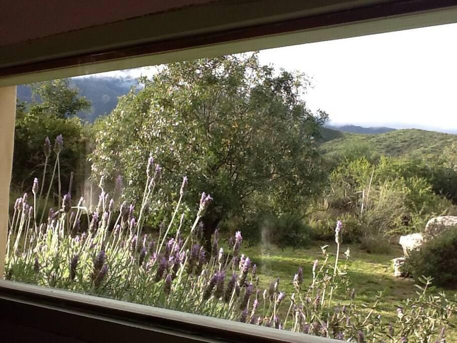 ventana al sur desde cuarto este las lavandas asoman...