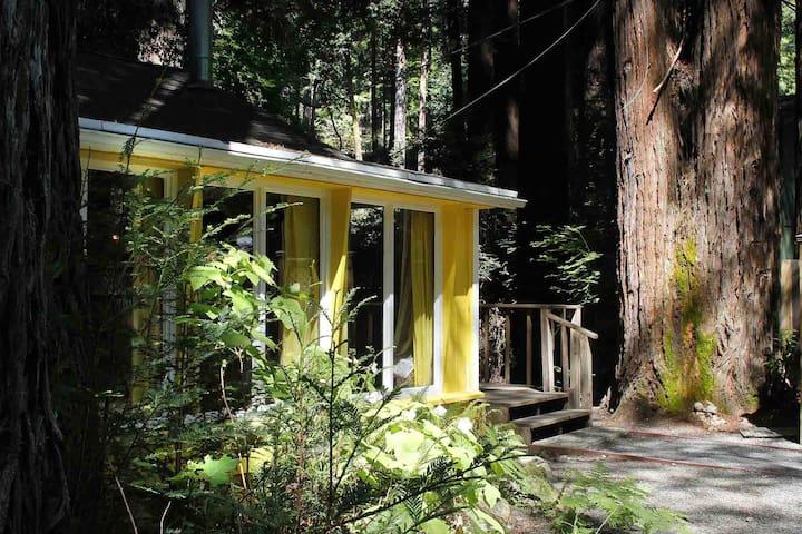 LEMON DROP: Redwoods | Woodstove | Sauna | Fenced