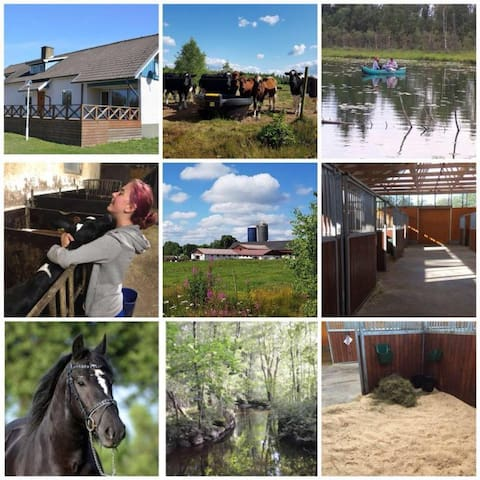 Stegemans Horse Hotel & Country Lodge