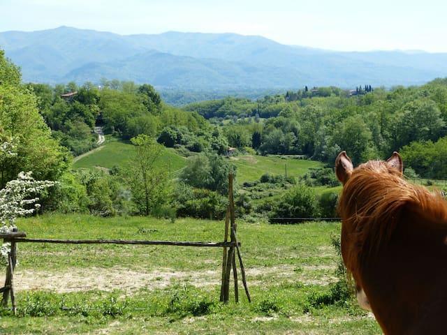 Firenze visto dalla campagna - Figline e Incisa Valdarno - Rumah
