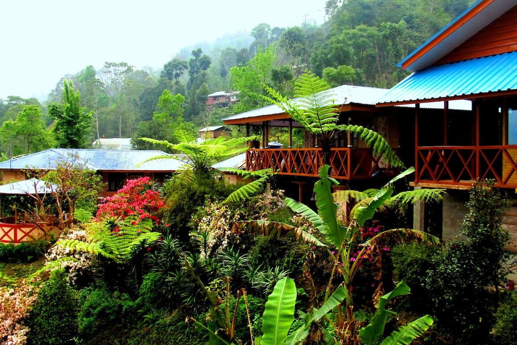 Overview of the homestay