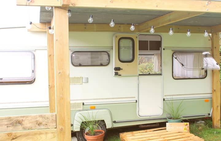 Buttercup, Cosy Caravan, Caravan site