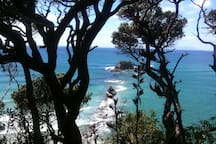 Head rock, mangawhai heads surf beach....