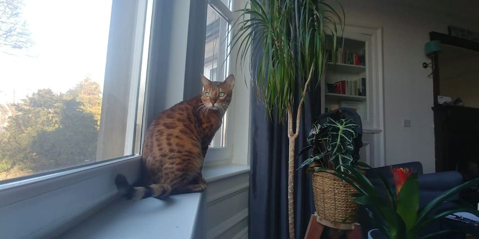 Sunny double room with Bengal cat, free parking