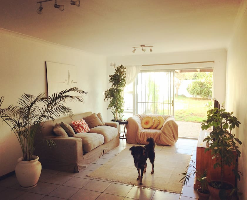 Living room, and the main man Tonto the dog :)