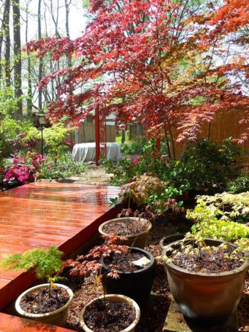 Relax on the deck and enjoy the shade the songbirds and colorful plants.