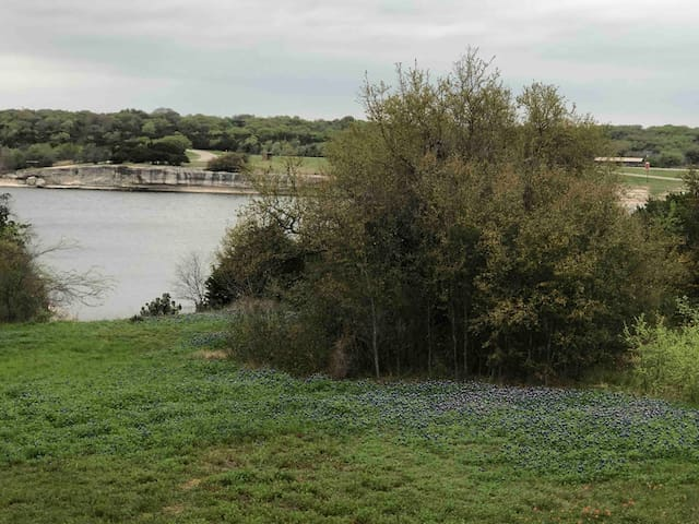 Sunset Cove is blooming with Bluebonnets!