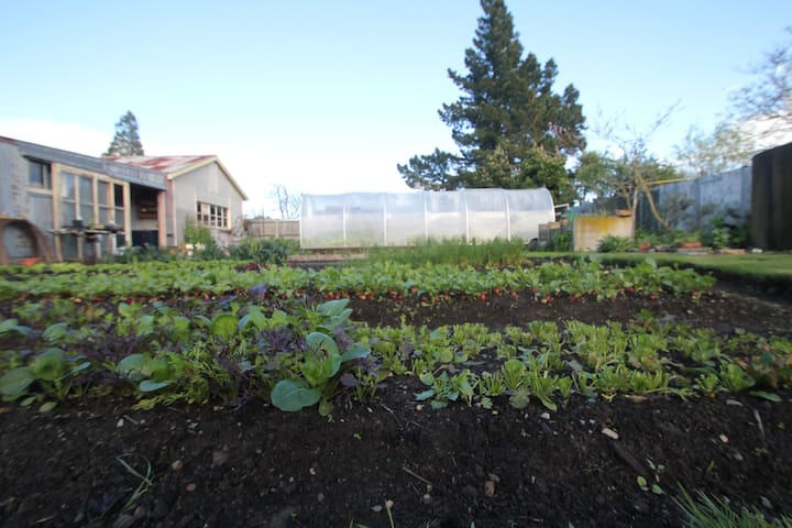 Oxford Urban Gardener Hub - Urban market garden