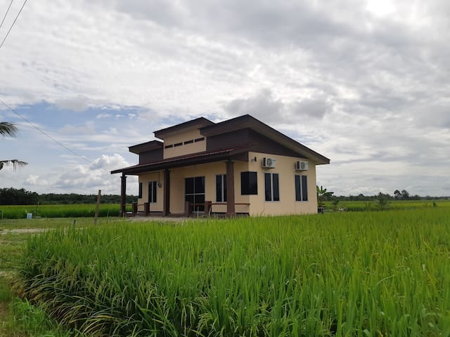 Muslim Homestay - paddy field environment