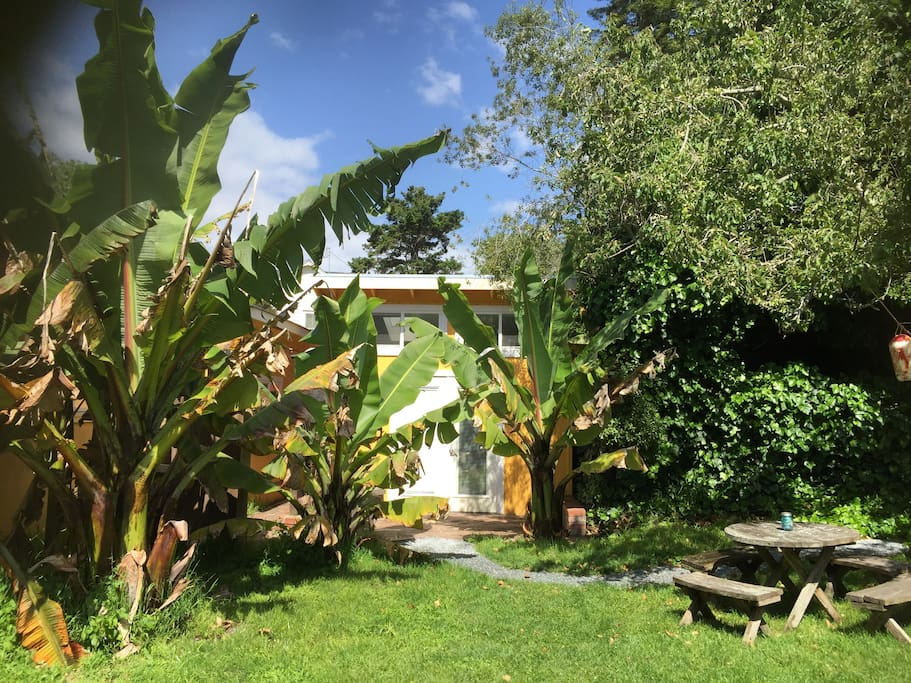 The banana trees really have grown! Somewhere behind them is the bungalow. Good privacy from your private deck.
