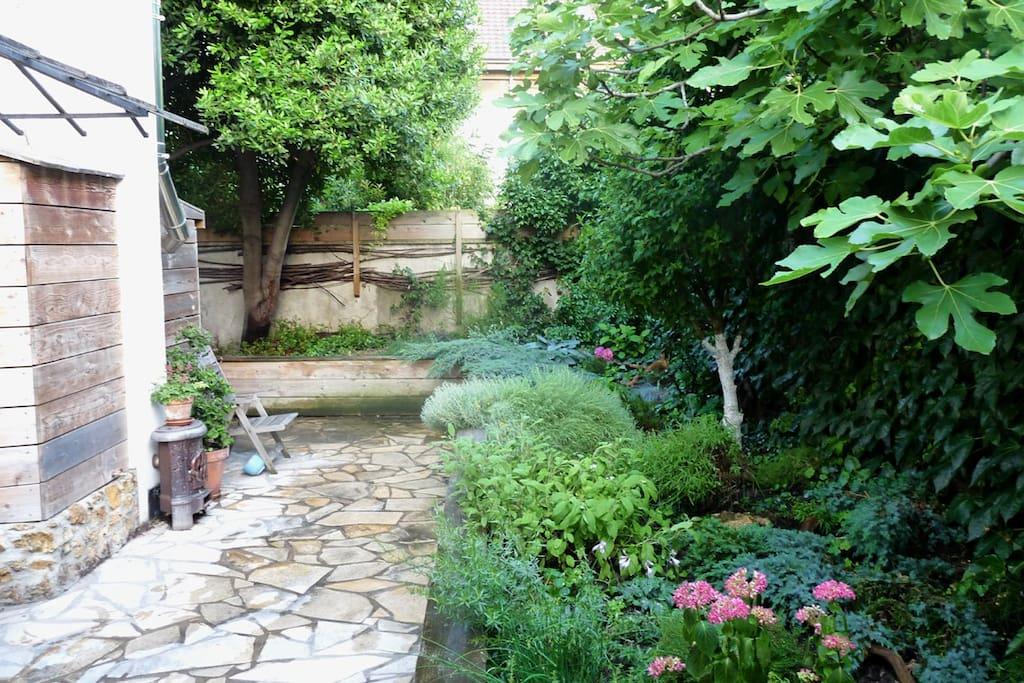 Le jardin arrière / the back garden