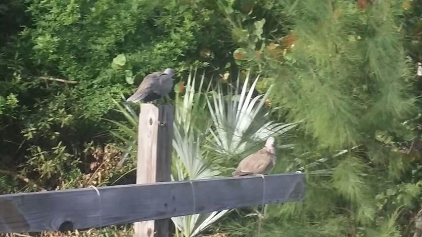 Bird-Life