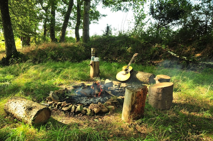 A secluded woodland for wild-camping in Mid Devon