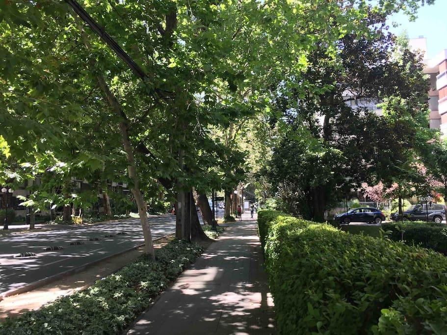 Avenida Ricardo Lyon - Providencia