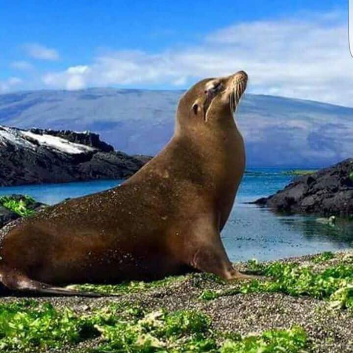 Galapagos Homes