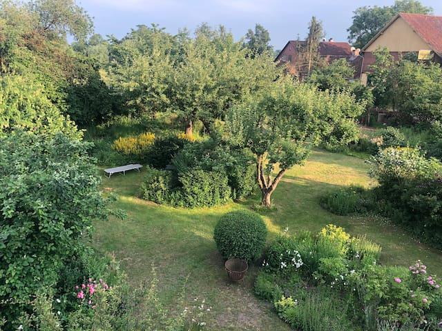 Der 150 Jahre alte Garten, in den Ihr blickt.