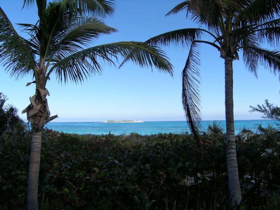 Surrounded by coconut palms.