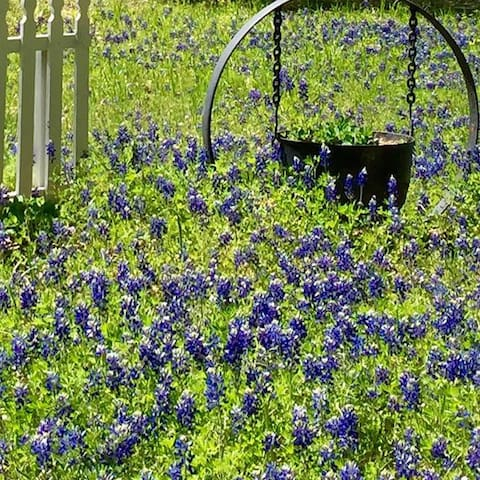 Texas bluebonnets, y'all.