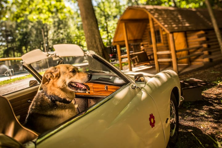 Pet Friendly Classic Camping Cabin in Williamsburg