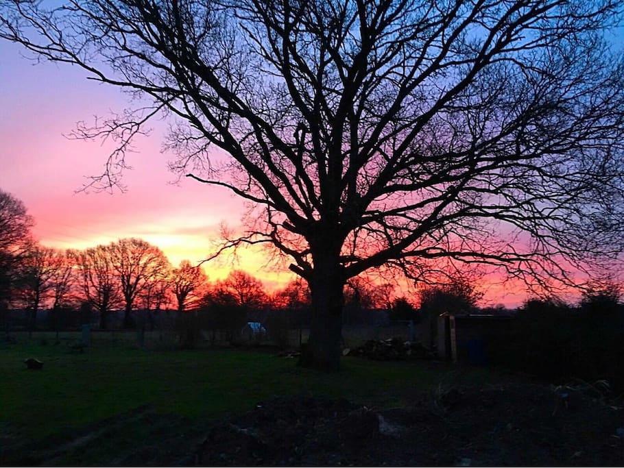 Un coucher de soleil hivernal sur le jardin