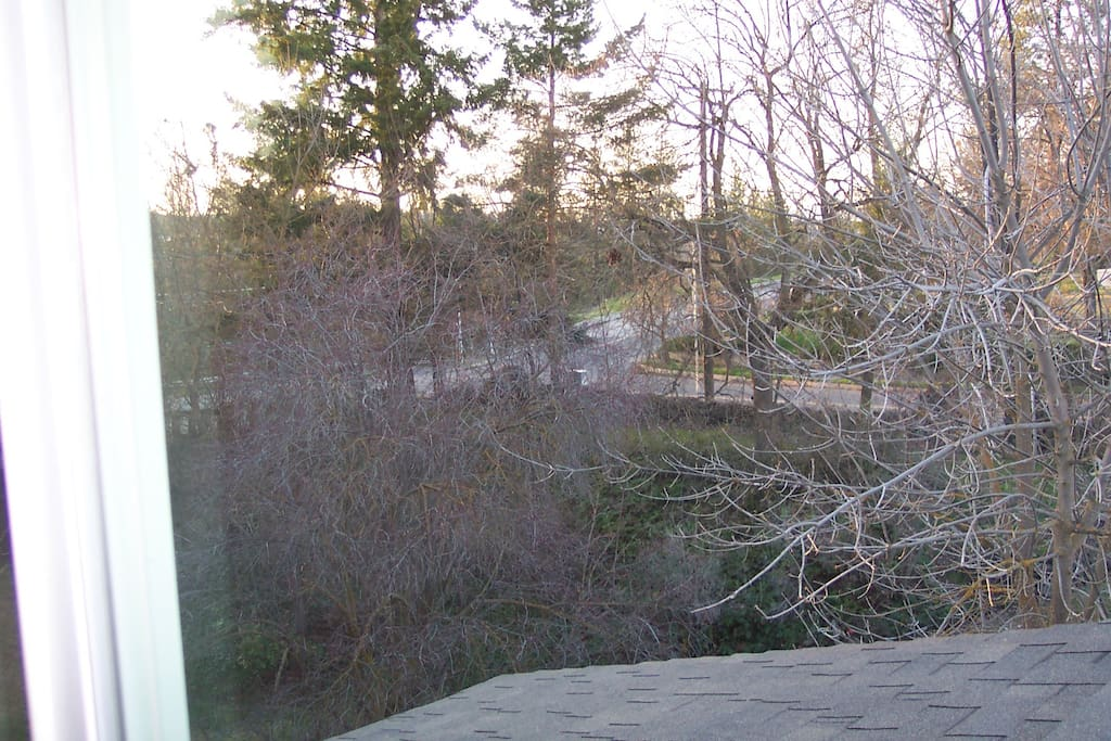 Tree top views! They are full of leaves now. Need new picture.