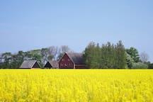 Vår gård med anor från 1700-talet.